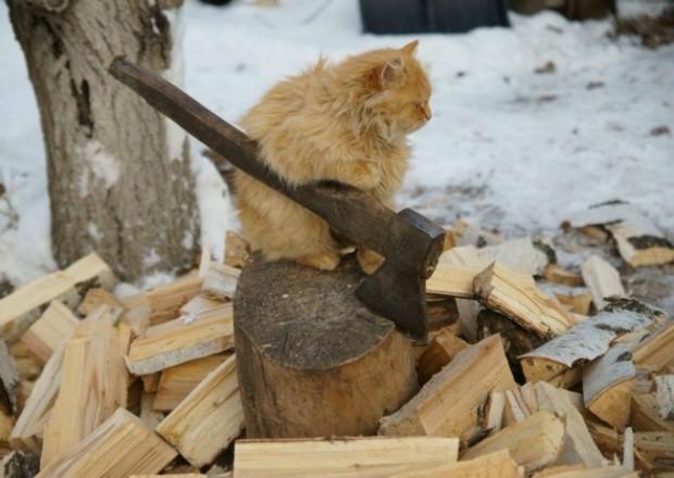 Mamasını kazanmak için oduncuda çalışması gereken bu cengaver
