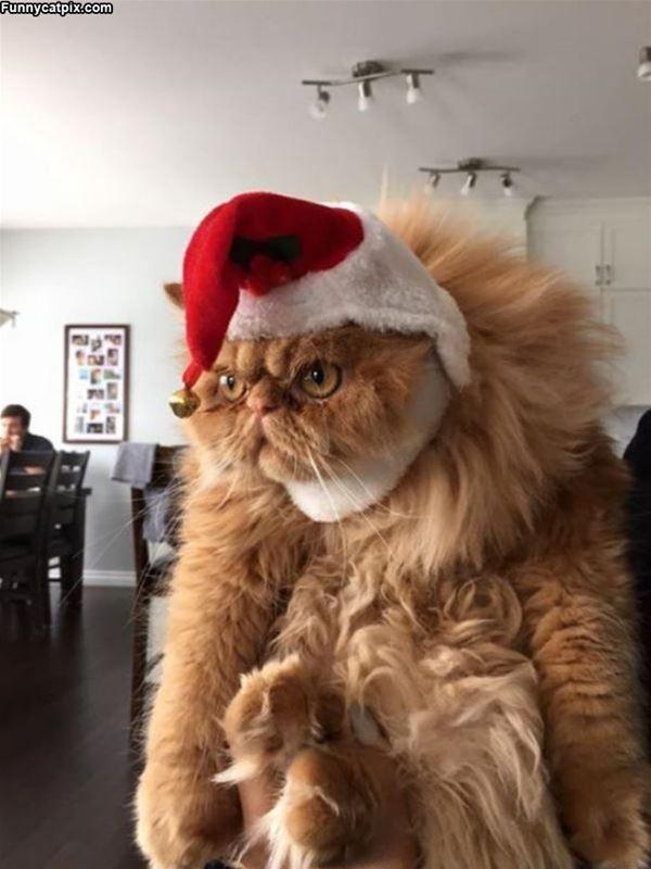 Noel Baba'dan da yılbaşından da nefret eden bu turuncu
