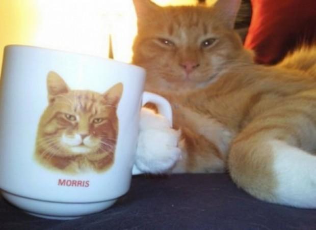 Üzerinde fotoğrafı olan kupası olmadan su içmeyen bu kedi