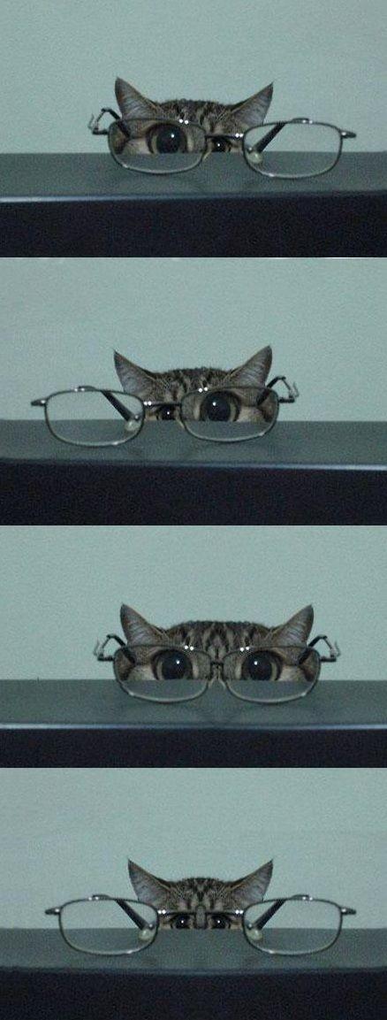 Ve gözlük sanatının tüm inceliklerini bir güzel döktüren bu minnak
