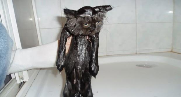 Yıkandığı için hayata küsen bu kedi