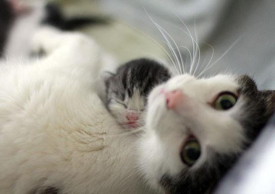 """""""Artık ben de anneyim"""" bakışları"""