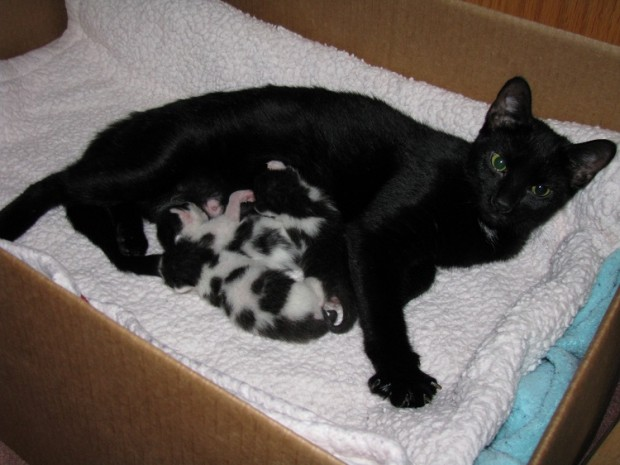 Ve anne kedi güzelliğinin benek benek halleri…