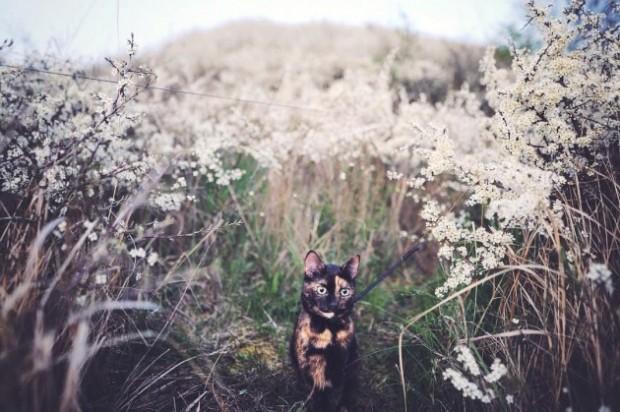 Bahar aylarında çiçekler içinde gezinirken.