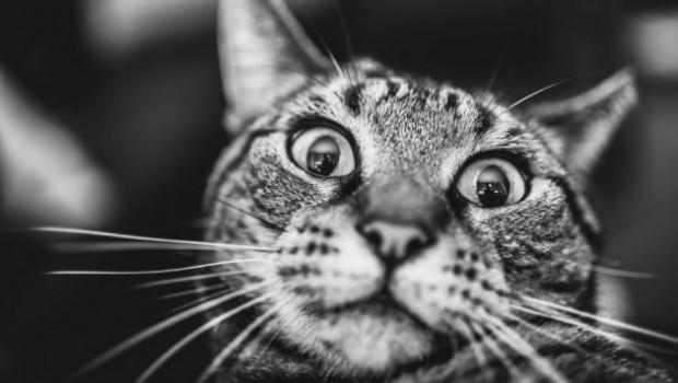 Bir hayvan ki; hayatınızın neşesi, ciğerinizin köşesi! Tabii ki kedilerden bahsediyorum, ya siz ne sandınız?