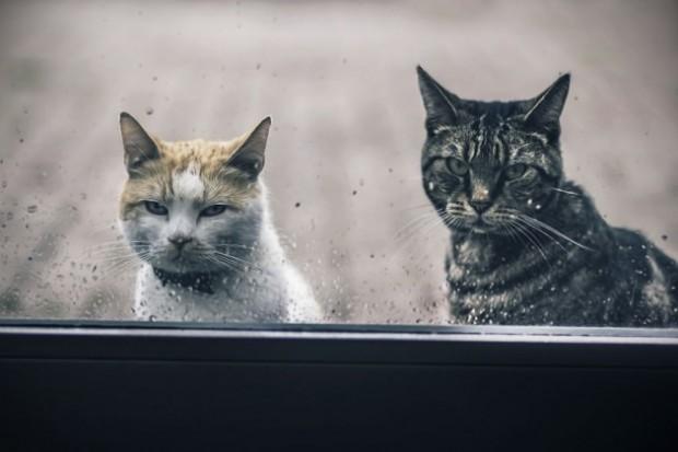 Ve siz siz olun, bir kediyi sakın ola kızdırmayın!