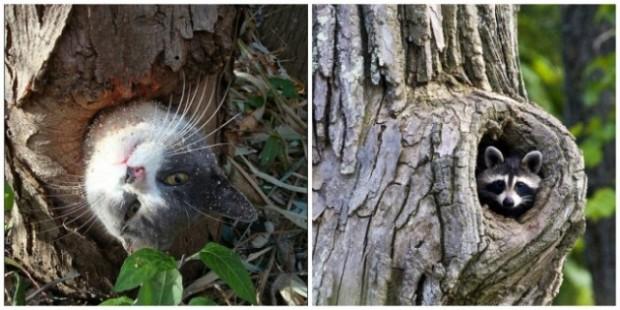 Kim demiş sadece sincaplar ağaç kovuğunda yaşar diye.