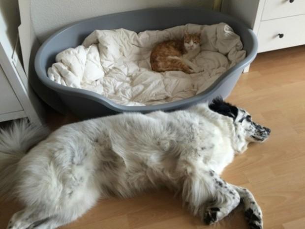 Bu yatak çok rahatmış ama sen asla burada yatamayacaksın!