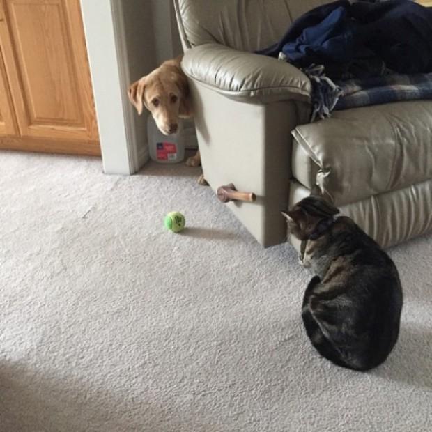 Oyuncağını geri mi istiyorsun? Gel de al o zaman.