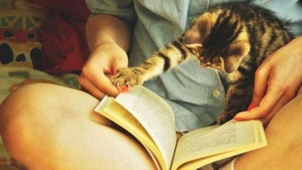 Sizin pisicikler ilginizi çekmek için neler yapıyor?