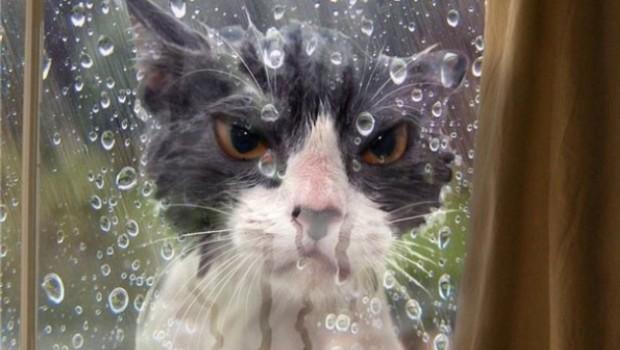 Bu kediler neden böyle şeyler yapıyor, anlamadık anlayamayacağız da... Neyse, vardır elbet bir sebebi.