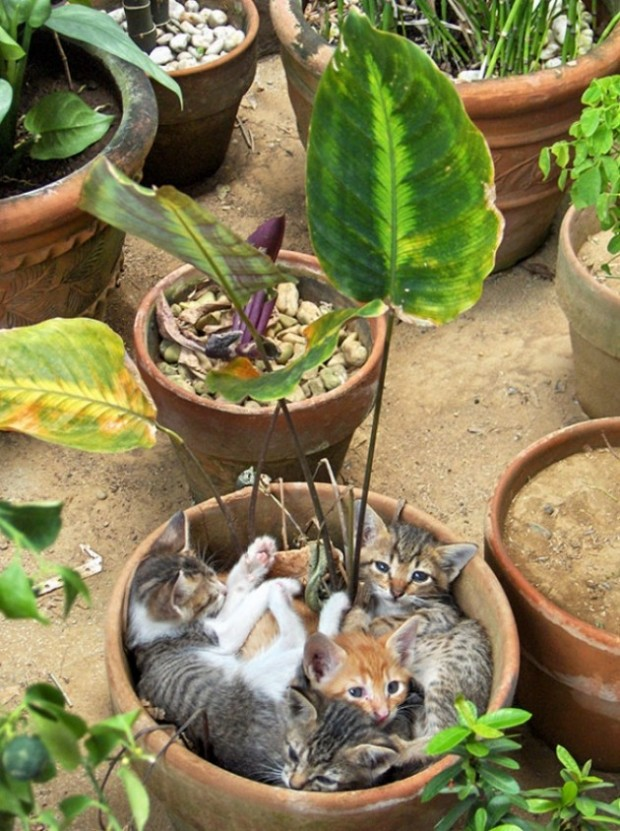 Bahar geldi, her yerde yavru kedi açıyor.