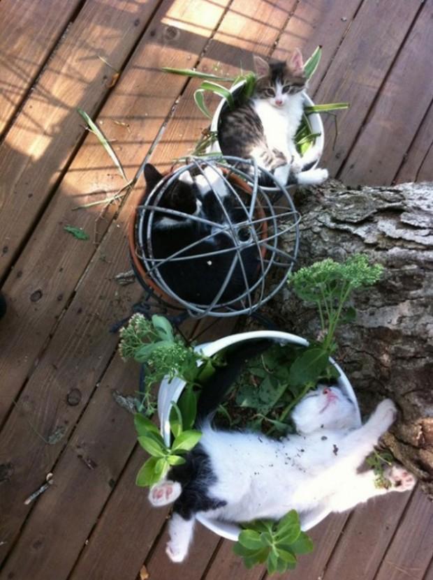 Kediler bahçe işinden sıkılınca...