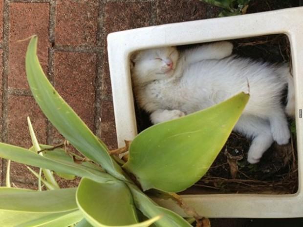 Üstün saklanma yeteneğine sahip kedi.