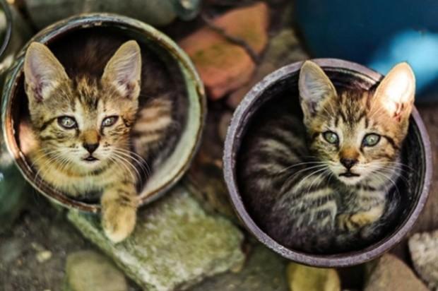 Hey, saksıda kedi mi arıyordun?