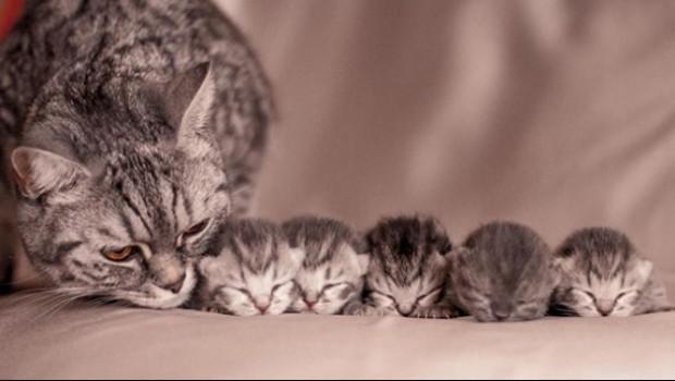 Bu kediler ailecek evlere şenlik! Hadi gelin onların aile saadetlerine şahit olalım...