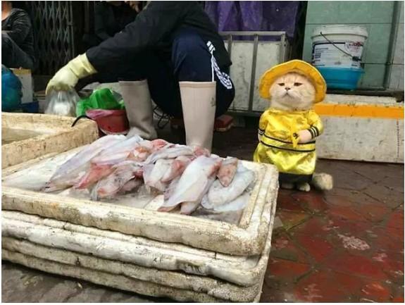 Vietnam'da küçük mü küçük, tatlı mı tatlı bir satıcı var