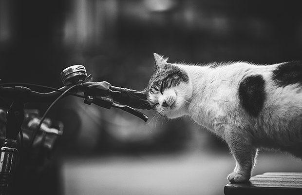 İtalyan fotoğrafçı Sabrina Boem'in evsiz kedileri fotoğrafladığı seri de bize yardımcı oluyor.