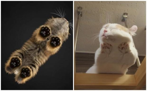 Buyurun sizlere en tatlısından tatlı kedi fotoğrafları…