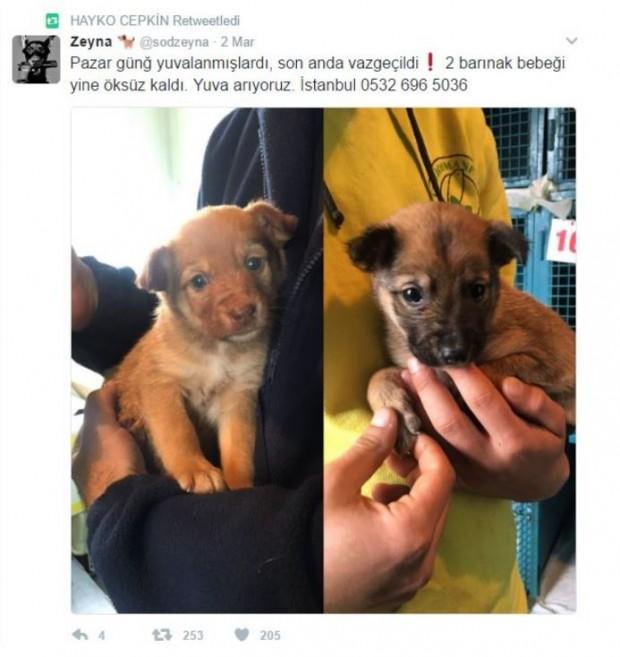 Cepkin, Twitter hesabından da hayvan sahiplendirme çalışmalarına destek veriyor
