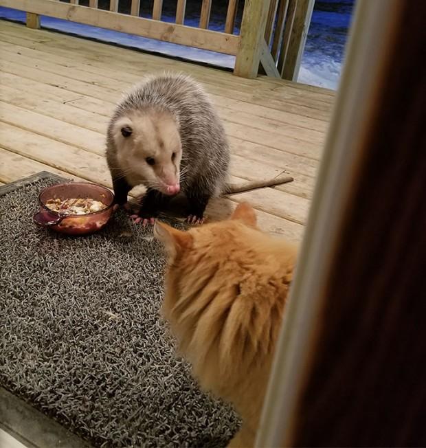 """""""Çok pardon ama şu an yediğiniz şey benim akşam yemeğim"""""""