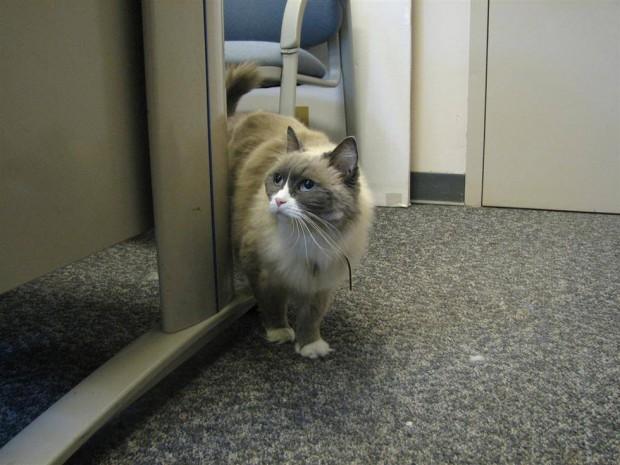 İş disiplini yüksek olan kedi 3. Matilda ile tanışın! Neden 3. diye soracak olursanız çok tatlı bir hikayesi var..