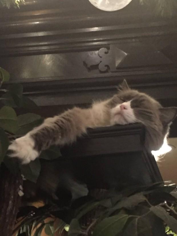 Gelen insanları karşılamaya bayılıyor bu işkolik kedi ve en sevdiği yer ise bavul taşıma arabalarının üstü