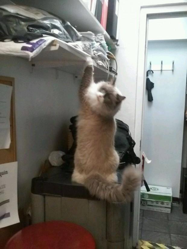 Matilda ayrıca gelen müşterilerinin eşyalarının kontrolünü yapmayı da kendine görev edinmiş