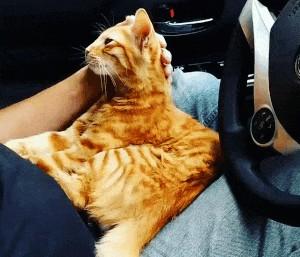 Havalimanına acilen gitmeleri gereken aile kediyi uyandırmadan yolculuklarına devam ediyorlar.