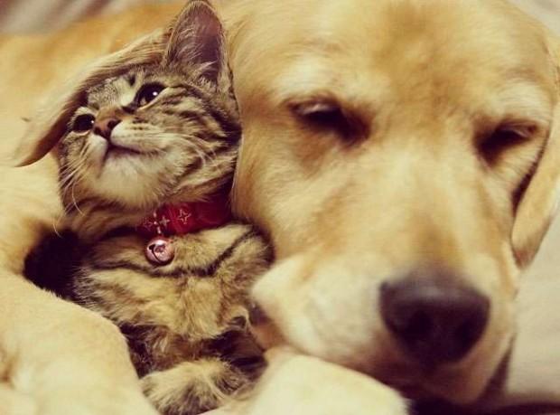 İşte başka kedi ve köpeklerin derlemesi…