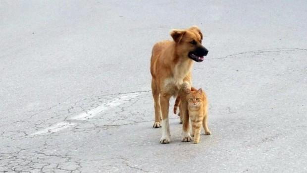 Sokak kedisi ve sokak köpeği