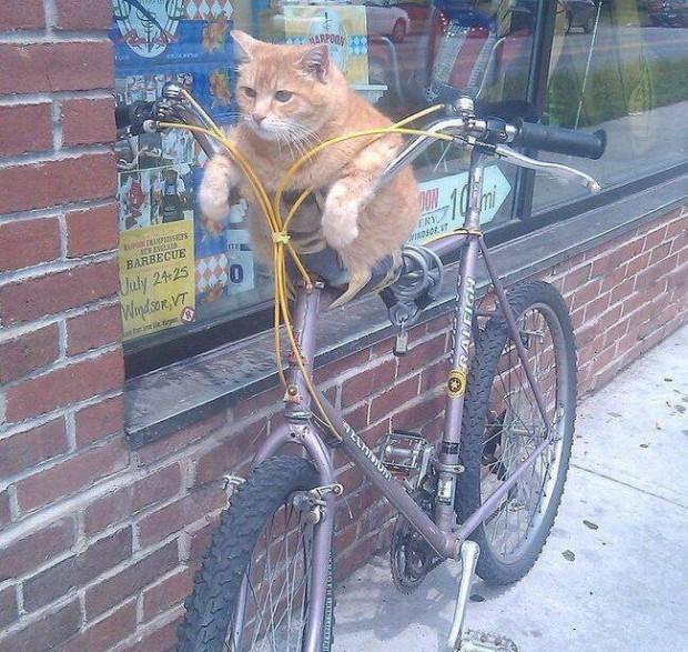 """""""Yaş mama almaya gitmek için bisiklete binmeye karar verdim. Kim bilir bu iki tekerlekli, tekrar ne zaman yola çıkacak."""""""