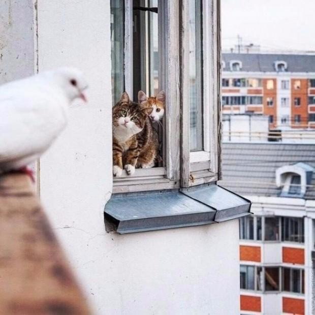 """""""Bu iki kedi, güvercinin intihar etmesini engellemeye çalışıyor."""""""
