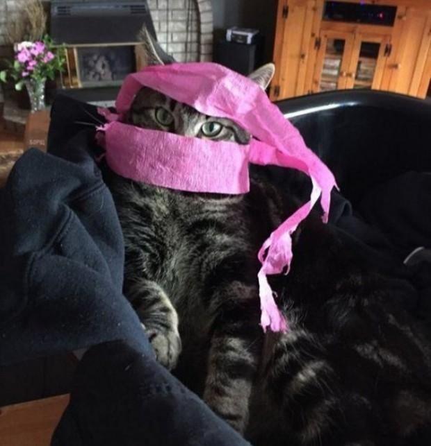 Bu kedi, çekiciliği ile tüm Asya güzellerini gölgede bırakıyor.