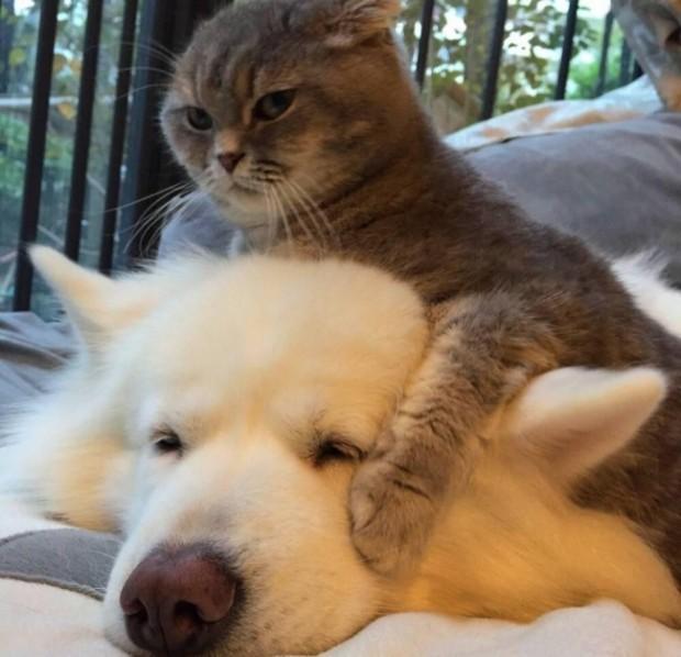 """""""Aslında bu köpek, benim."""""""