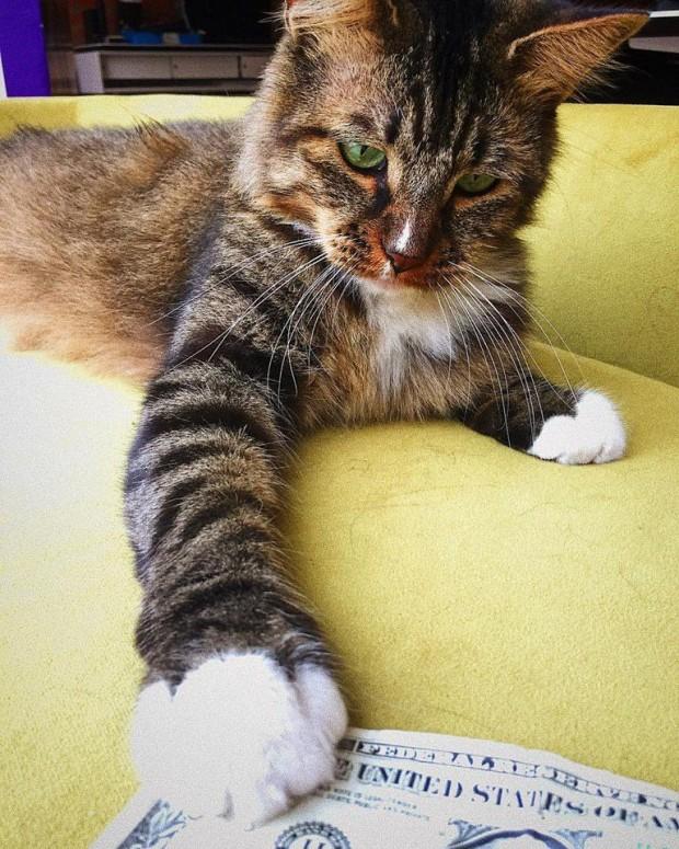 Bu karizmatik kedi, şirketin haşere sorununa hemen çözüm getiriyor ve ofisin bir numaralı denetçisi haline geliyor.