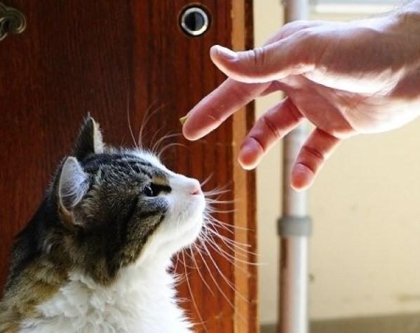 Tüm bunlar bir tesadüf mü bilinmez ama bir kedinin sevgisini son anlarınızda hissetmek her şeyden daha önemli…