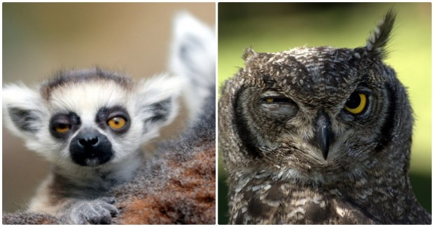 Dün Gece Eğlenceyi Abartıp Akşamdan Kalan Hayvanların Fotoğrafları