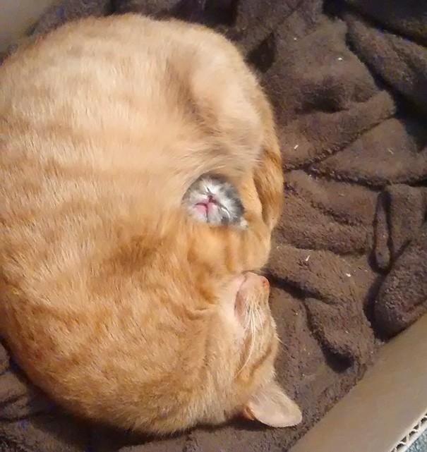 Yavrularını uyurken en rahat edecekleri şekilde sarmasını çok iyi bilirler.