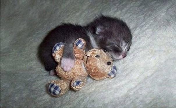 Üzerinizde huzurla uyuduklarında tüm yorgunluğunuzu ve stresinizi bir anda alırlar.