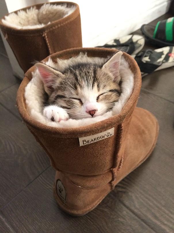 Uyunacak en rahat yeri bulmayı da en iyi onlar bilir.