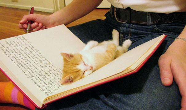 Yapmanız gereken işi, okumanız gereken kitabı çok iyi sezerler ve hemen onun üstünde uyumaya başlarlar.