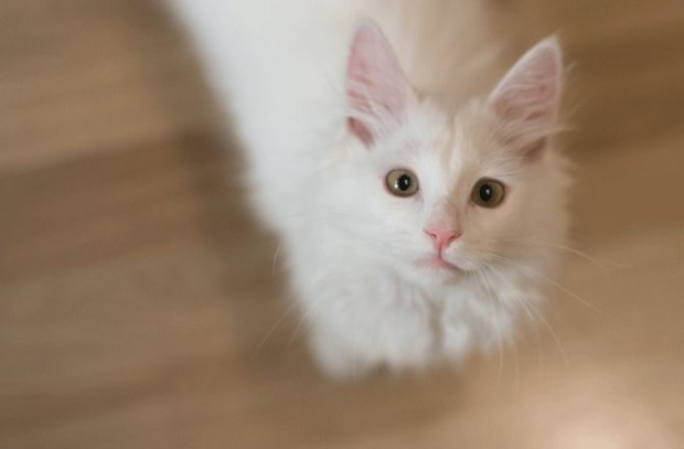 Erkek kedilere verilen isimler: