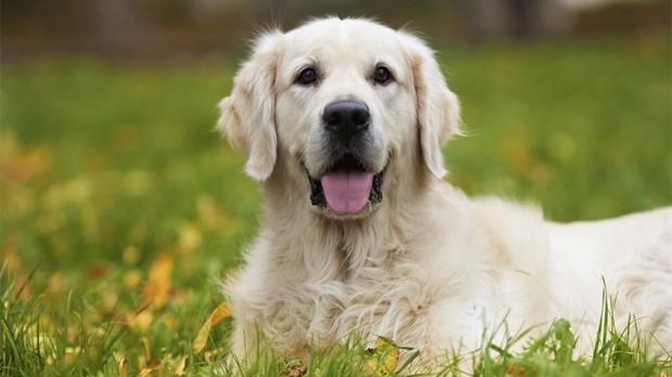 Dişi köpeklere verilen isimler: