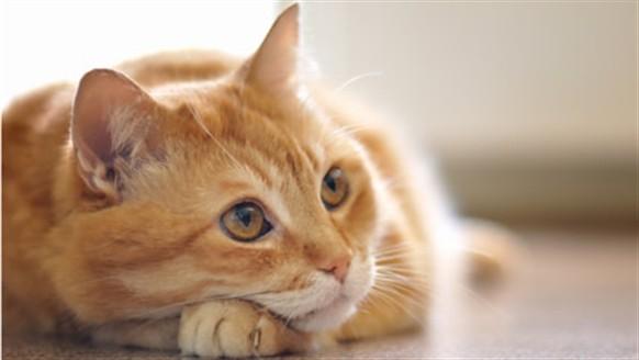 Dişi kedilere verilen isimler: