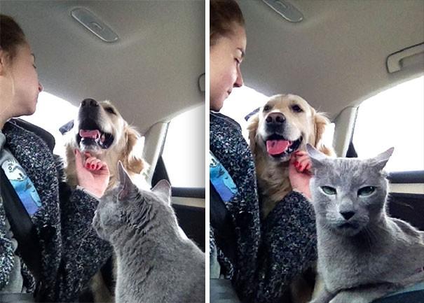"""""""Hıh, deli insan, beni seveceğine, o aptal salyalı hayvanı seviyor"""""""