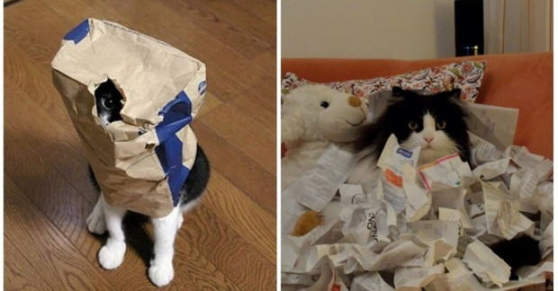 Kediler saklanmayı sever çünkü kendilerini orada daha güvende hissederler. Sürekli kutuların içlerine girmek istemelerinin en net açıklaması da budur.
