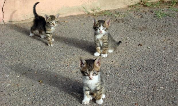 Sokaktaki tüm kedileri sahiplenmek istiyorsanız