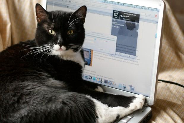 Facebook'taki yüzlerce kedili gruba üyeyseniz @kediTV mesela :)