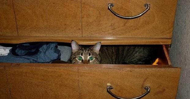Tekir kedilerin huylarını öğrenmek için ileri butonuna basınız.